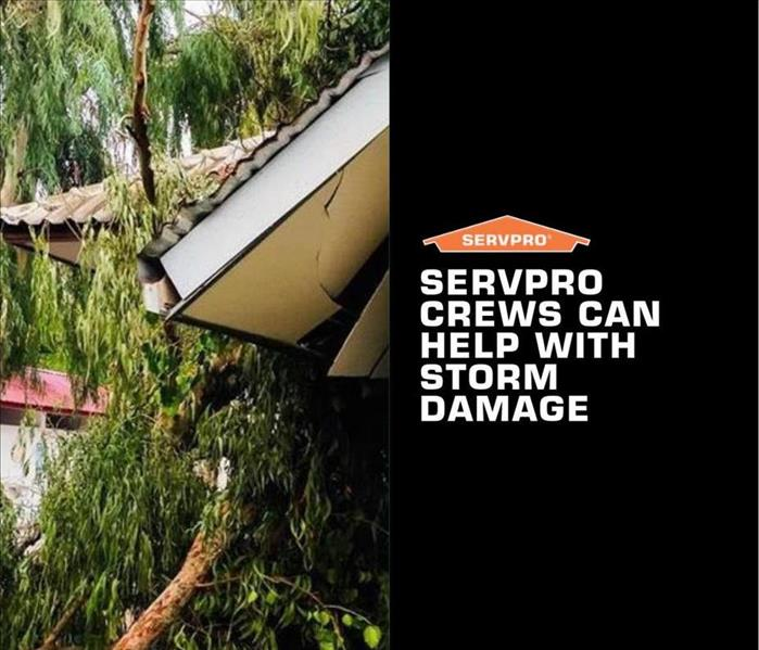 Split tree after storm damage on home with text that says SERVPRO crews can help with storm damage and SERVPRO logo